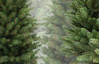 "Набор ""Ёлкин лес"" (5+1 (подарок) упаковок семян ёлок в упаковках по 5 грамм )."