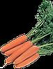 Семена моркови Рига F1 25000 семян Rijk Zwaan