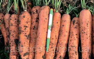 Семена моркови Фидра F1 25000 семян Rijk Zwaan