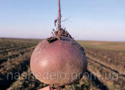 Семена свеклы Бебибит 100000 семян Rijk Zwaan