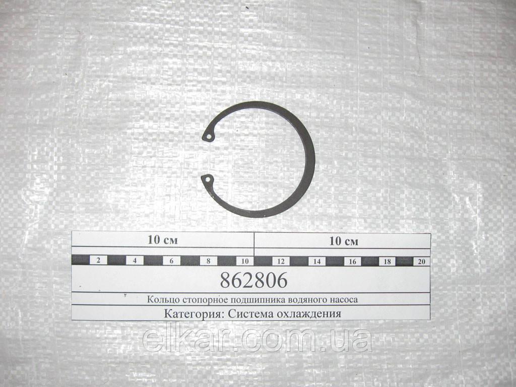 Кільце стопорне підшипника водяного насоса  862806 (вир-во Китай)