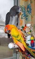 Прогулочный костюм памперс для попугаев, костюм памперс для выгула попугаев размер  L