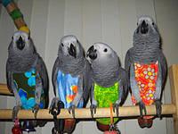 Прогулочный костюм памперс для жако, прогулочный костюм памперс для выгула попугаев размер XL