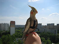 Прогулочная шлея для попугаев, шлейки для выгула птиц размер small