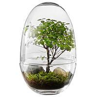 Стеклянная ваза-террариум