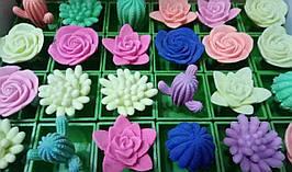"""Растишка """"Кактусы и цветы в вазоне"""""""