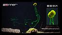 Бойлы Winner Method Feeder Diffusion Pop-Up Micro Chunks 40g Hot Krill, фото 4