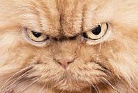 "Спрей для кошек от царапанья мебели ""Когтеспрей"""