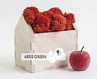 Новогодний корпоративный сувенир Moss Houses Red
