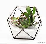 Флораріум Basket mini, фото 5