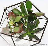 Флораріум Basket mini, фото 4