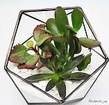 Флораріум Basket mini, фото 3