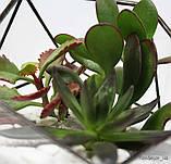 Флораріум Basket mini, фото 2