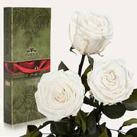 Три долгосвежие розы Белый Бриллиант в подарочной упаковке