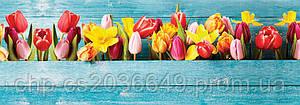 Стеклянный фартук для кухни - скинали Тюльпаны