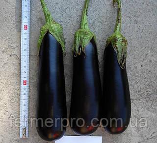 Семена баклажана Фарама F1 Tezier 5 грамм