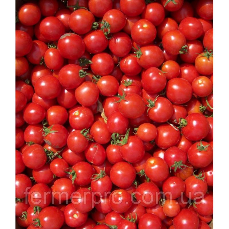 Семена томата Конори F1 1000 семян Kitano seeds