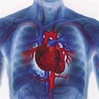 Серце, судини, кров, лімфа