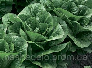 Семена салата Клаудиус 1000 семян Rijk Zwaan