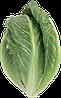 Семена салата Крунчита 5000 семян Rijk Zwaan