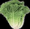 Семена салата Октавиус 1000 семян Rijk Zwaan