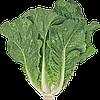 Семена салата Викторинус 5000 семян Rijk Zwaan
