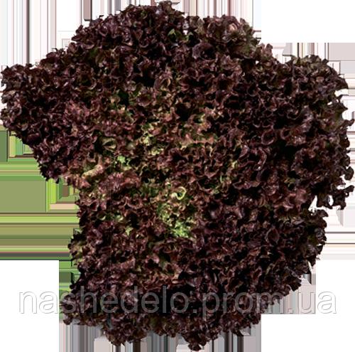 Вілбур 1000 сем. салат полукачанный РЦ