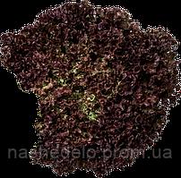 Вилбур 1000 сем. салат полукачанный РЦ