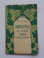 Виноград на стенах домов и во дворах В.Зотов Одесса фотографии 1957 год