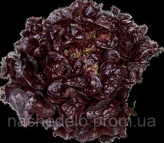 Семена салата Руксай 1000 семян Rijk Zwaan