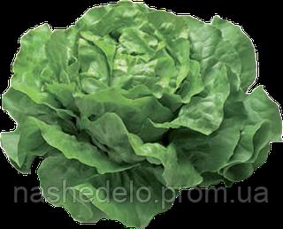 Семена салата Джиска 1000 семян Rijk Zwaan
