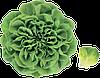 Семена салата Аквино 1000 семян Rijk Zwaan