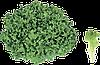 Семена салата Експлор 5000 семян Rijk Zwaan