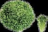 Семена салата Експедишн 1000 семян Rijk Zwaan