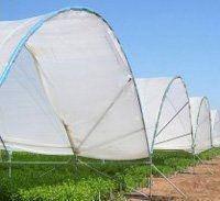 Плівка запроектована для вирощування м'яких фруктів   KRITIFIL® 2598 UHD 5 сезонів