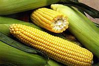 Кукуруза  сахарная Ароматная, 500г