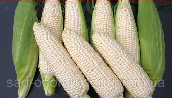 Кукуруза Белая Королева, 500г