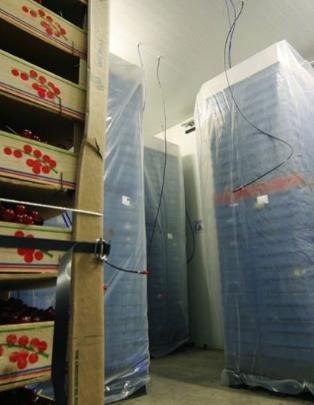 фото мішків виробництва Palliflex, система захисту ягід
