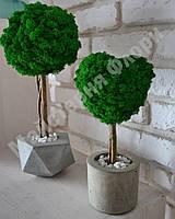 """Стабилизированное дерево """"Сердце"""" в бетонном кашпо, фото 1"""