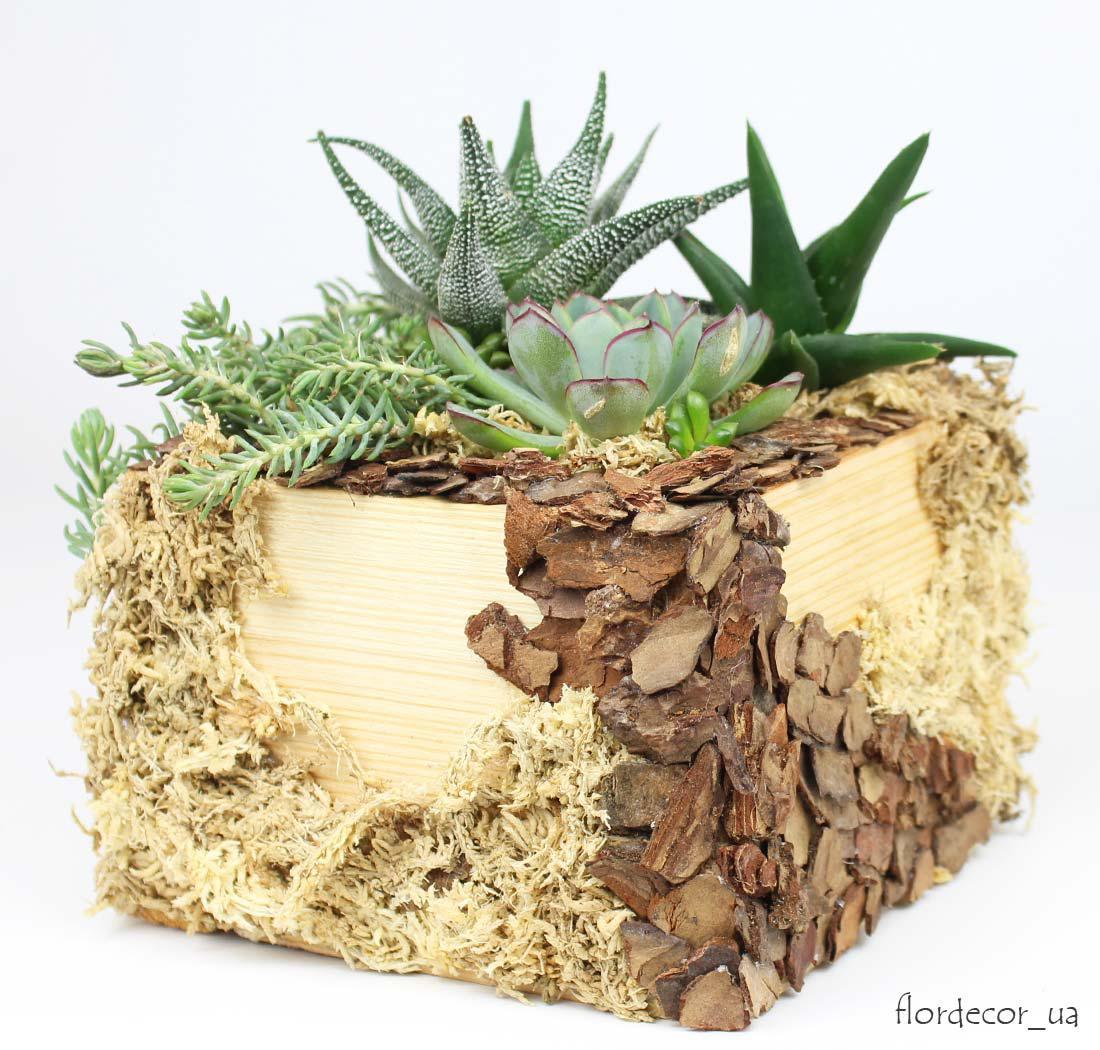 Флорариум: куб из натурального дерева