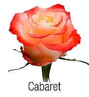 Экв. Cabaret 50см, фото 1