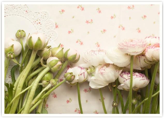 Купить оптом цветы в днепре без посредников доставка цветов из магазина минск