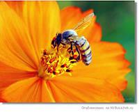 Аквакорм витаминизированный корм для пчел