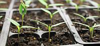 Как сделать так, чтобы семена взошли?