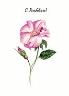 """Открытка """"Роза"""", фото 1"""