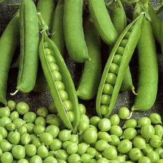 Амброзия (5кг) Насіння овочевого гороху, Satimex