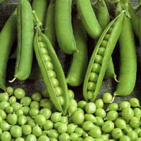 Насіння овочевого гороху Амброзия (5кг) Satimex