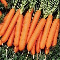 Морковь столовая Нантская (15кг)