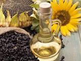 Гибрид подсолнечника ЖАЛОН, Купить засухоустойчивый и урожайный подсолнечник ЖАЛОН в Украине. Олийный. Экстра, фото 7