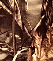 Чехол на капот лодочного мотора MERCURY 5М (2) камыш